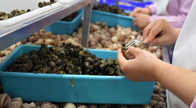 Bilecikten Fransaya 45 tır salyangoz ihracatı