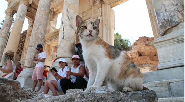 Sahipsiz kedilerin yuvası: Efes Antik Kenti