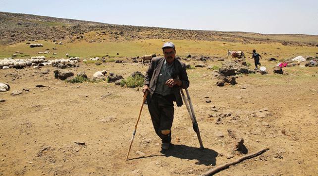 Koltuk değneğiyle 20 yıldır çobanlık yapıyor
