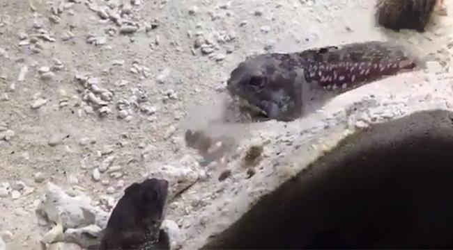 Akvaryumda yaşayan 2 balık kavga etti