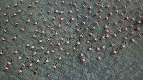Burdur Yarışlı Gölünde flamingo yoğunluğu