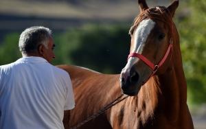 """Milyonluk atların fedakar bakıcısı """"Oktay çavuş"""""""