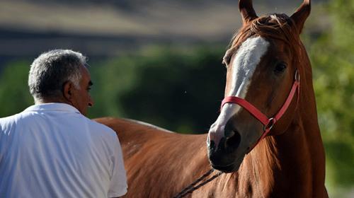 Milyonluk atlara özenle bakıyor