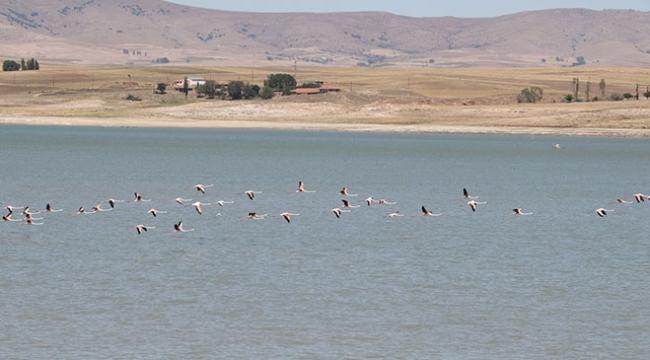 Yozgat Gelingüllü Baraj Gölü kuş cennetine dönüşüyor