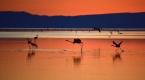 Flamingo cenneti Tuz Gölüne turist akını