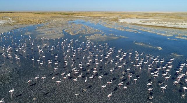Turistlerin gözdesi Tuz Gölünü flamingolar süslüyor