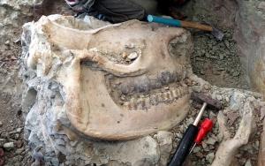 """""""Omurgalı Fosil Lokalitesi""""nden bu yıl 140 fosil çıktı"""