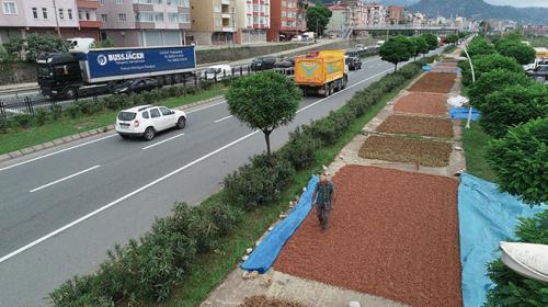 Trabzon sahil yolu fındıkla renklendi