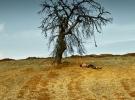 Türkiye'nin Oscar adayı 'Ahlat Ağacı'