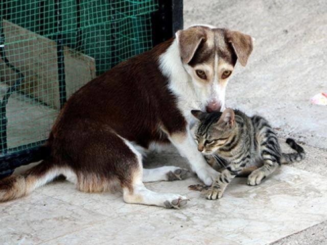 Yavru kediye annelik yapan köpek görenleri şaşırtıyor