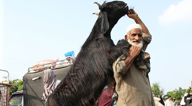 Pakistanda kurban pazarları rengarenk