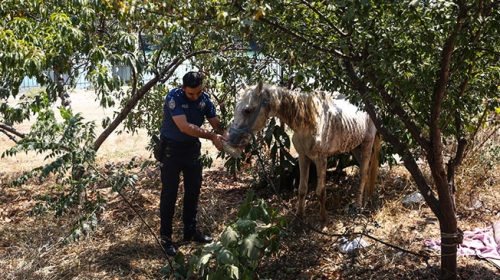 Adana'da susuz ve aç bırakılan yaralı at tedaviye alındı
