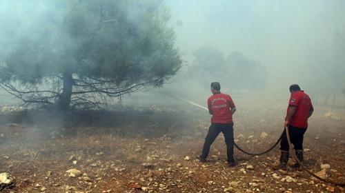 Şanlıurfa Göbeklitepe yakınlarında orman yangını