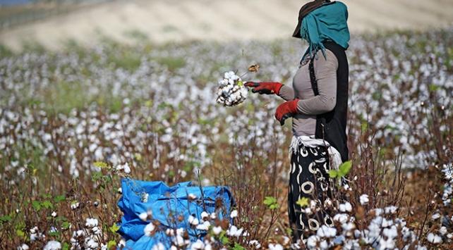 Beyaza bürünen tarlalarda sıcak hava işçileri zorluyor