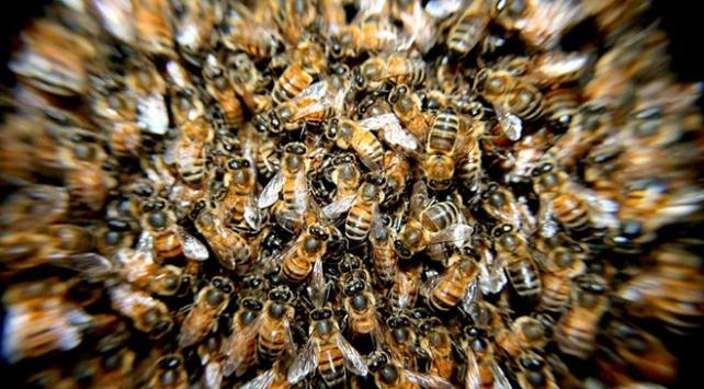 Arıların saldırısına uğrayan kadın yaşamını yitirdi