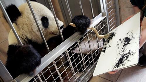 """Viyana Hayvanat Bahçesinin sanatçı pandası """"Yang Yang"""""""