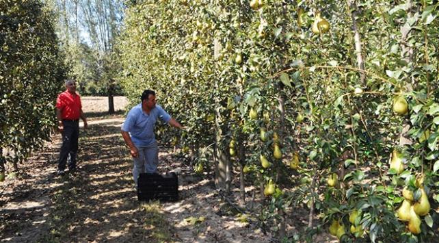 Meyve yetiştiriciliğinde köy halkına örnek oldu