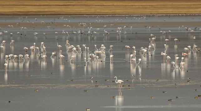 Van Gölü havzasında kuşların görsel şöleni