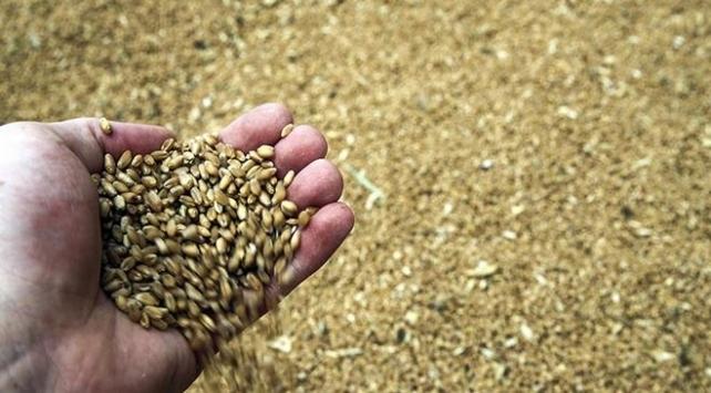 """Tarım ve Orman Bakanlığından """"buğday stoku"""" açıklaması"""