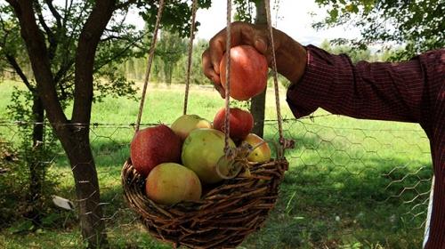"""Yoldan geçenlere """"göz hakkı sepeti"""" ile meyve ikramı"""