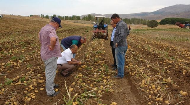 Sivasta sertifikalı tohumluk patates hasadı başladı