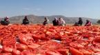 Elazığın kurutulmuş domatesi Avrupa mutfağında