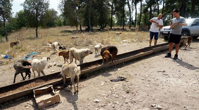 Hayvanseverler sokak hayvanlarına atık malzemelerden yuva yapıyor