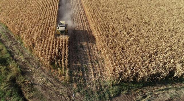 Mısır Diyarbakırlı çiftçiyi sevindirdi