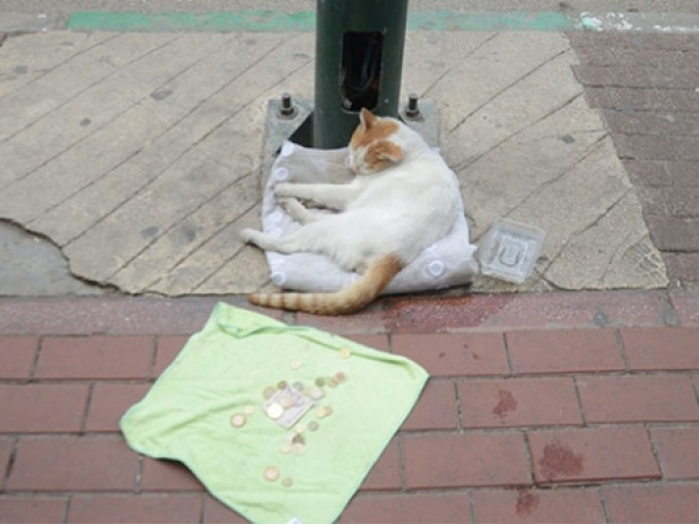 Bursa esnafından ilginç deney: Mama masrafları için kediyi dilendirdiler