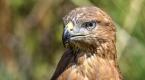 Tedavi edilen 35 kuş doğaya bırakıldı