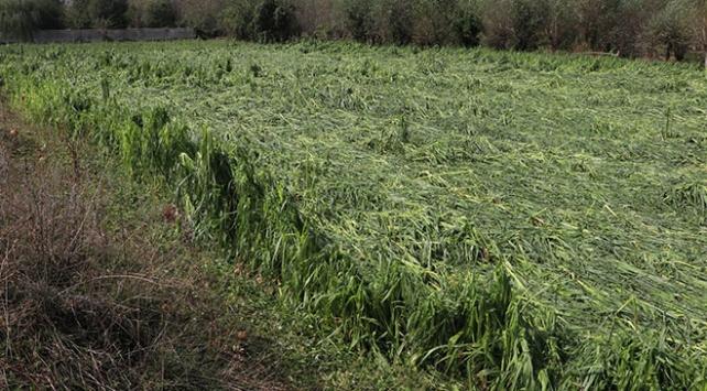 Kastamonuda sağanak ve doludan tarım arazileri zarar gördü