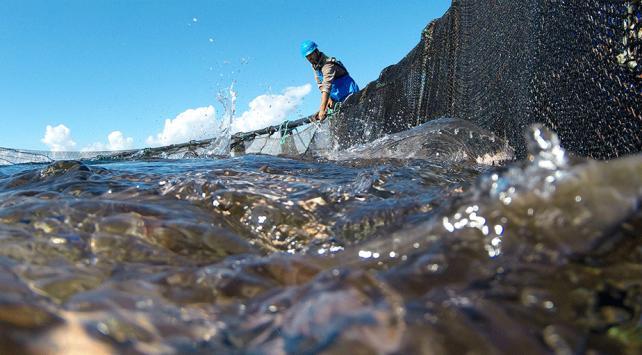 Rusyaya balık ihracatında hedef 100 milyon dolar