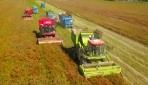 Çinin kuzeybatısında verimli biber hasadı