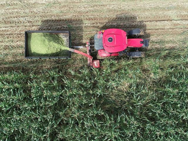 """""""Milli Tarım Yerli Tohum Deneme Ekimleri"""" projesinde ilk mısır hasadı yapıldı"""