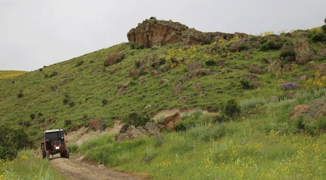 Erzincanda ayı saldırısına uğrayan iki kişi yaralandı