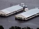 Kasırganın vurduğu ABD'de tavuk çiftlikleri sular altında kaldı