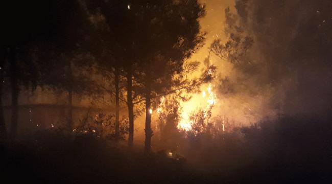 Adanada orman yangını