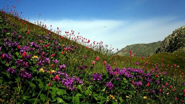 Kanadada 2 bin 400 bitki türü bulundu