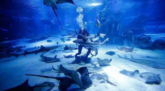 Avustralyada köpek balığının saldırdığı kadın yaralandı