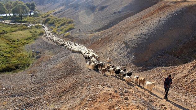 Göçerlerin yayladan köye zorlu dönüş yolculuğu