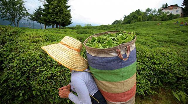 Türk çayında en fazla ihracat Almanya'ya