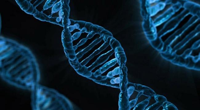 """Tüketilen gıdanın DNAya """"net"""" etkileri tespit edildi"""