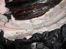 İranda 20 milyon yıllık fildişi fosili bulundu
