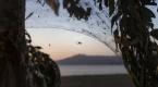 Yunanistanda sahili kaplayan örümcek ağları