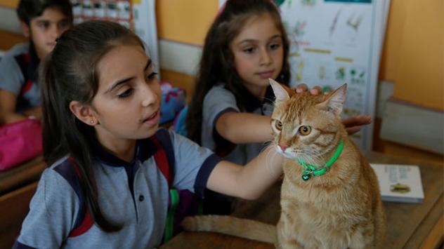 Kedi Tombi yaz tatilinin ardından okula döndü