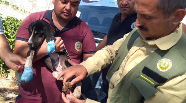 Yangından kurtarılan köpeğin yaralarını sağlık ekipleri sardı