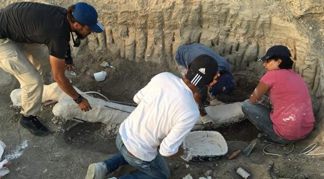 Kayseride bulunan fil fosilleri özel yöntemle taşındı