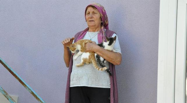 Köye bırakılan sahipsiz kedilere gönüllü bakıcılık yapıyor