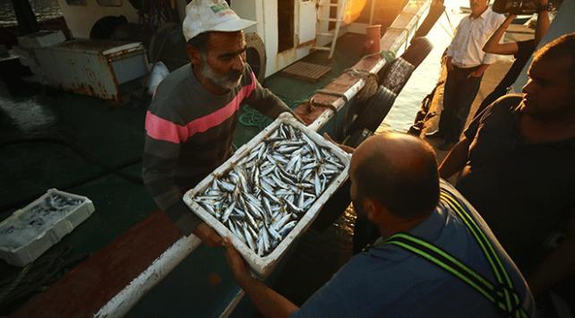 Batı Karadenizde balık bereketi