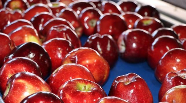 Organik mumlanan elmaların yeni rotası Uzak Doğu